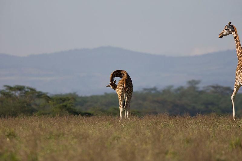 2007 07 22 Lake Nakuru 226