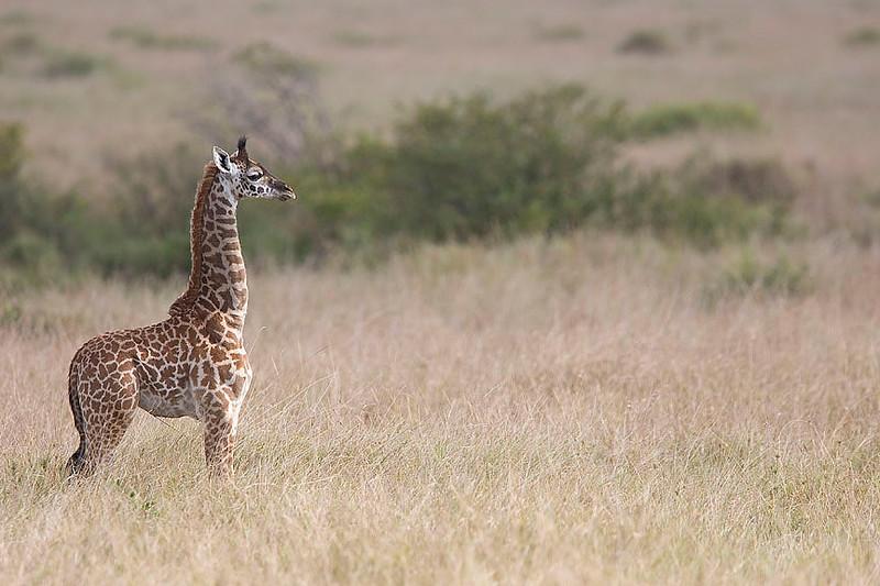 2007 07 24 Masai Mara 336