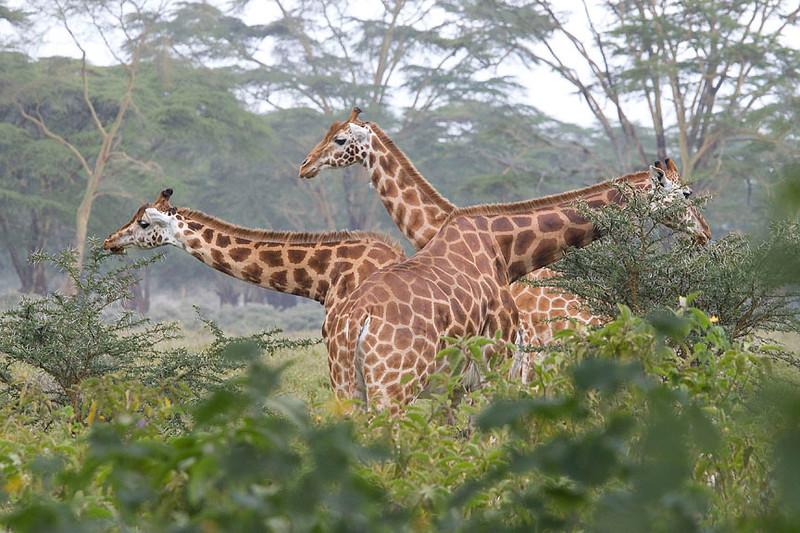 2007 07 21 Lake Nakuru 106