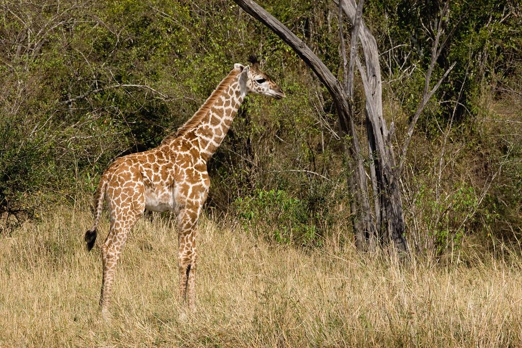 20100911_Maasi Mara_287