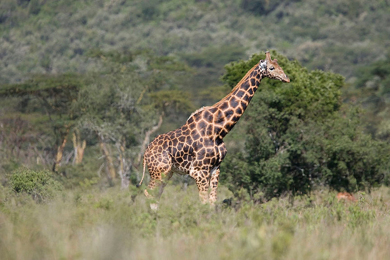 2007 07 22 Lake Nakuru 295