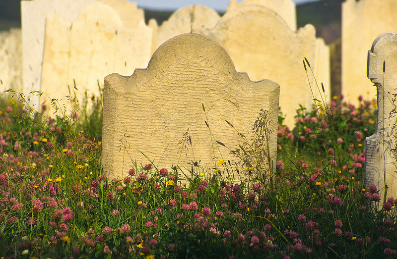 The early morning sun brightened this old graveyard and illuminated the stones and wildflowers.  It became a place of peace and beauty.  The names have been erased over time but the flowers make you stop and remember.