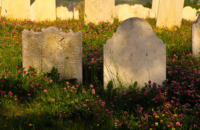 Old stones and lovely wildflowers in a cemetry in Maritime Canada for those lost at sea.