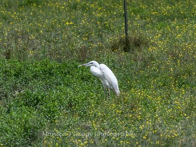 Herons 28 June 2018-1052