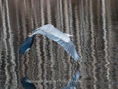 Birds Variety 12 Dec 2018-1564