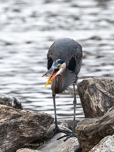 Birds Variety 12 Dec 2018-1803