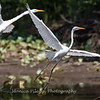 Herons Patuxent NT 24 Aug 2018-5604