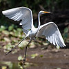 Herons Patuxent NT 24 Aug 2018-5603