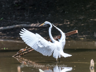 Herons Patuxent NT 24 Aug 2018-5685