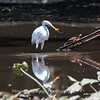 Herons Patuxent NT 24 Aug 2018-5710