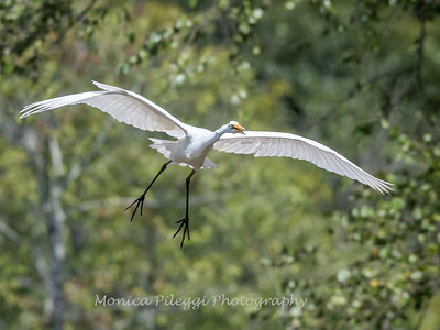 Herons Patuxent NT 24 Aug 2018-5596