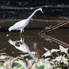 Herons Patuxent NT 24 Aug 2018-5705