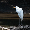 Herons Patuxent NT 24 Aug 2018-5644