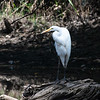 Herons Patuxent NT 24 Aug 2018-5669
