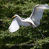 Herons Patuxent NT 24 Aug 2018-5601