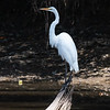Herons Patuxent NT 24 Aug 2018-5661