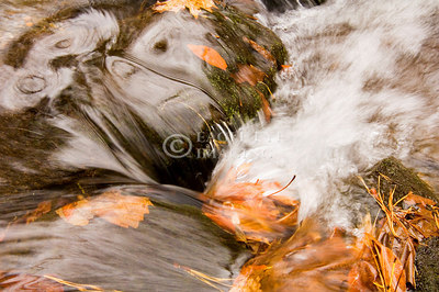 Water flows along a mountain stream as fall leaves add a touch of color