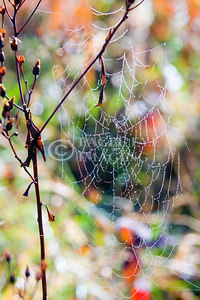 Dew clings to a spiderweb in the early morning