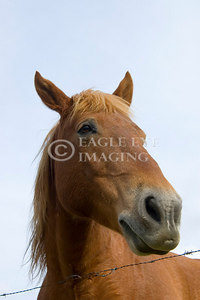 Looking up at a curious horse in a Tennesse pasture