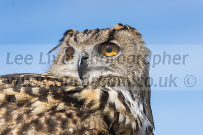 Gyrs International Falconry Centre