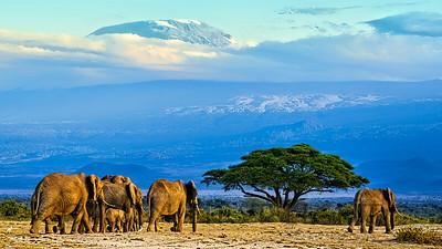 Kilimanjaro from Amboseli Kenya