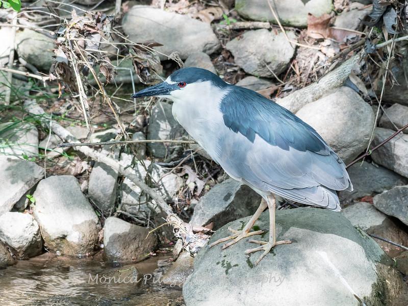 Herons April 2019-4899