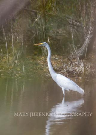 Wildlife images by Mary Jurenka Photography of Ames, Iowa