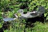 Heron favorite M15_1869