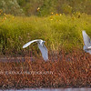 Wildlife images by Mary Jurenka Photography of Ames, Iowa