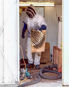 """""""Bee Hive"""""""