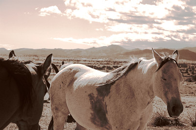 CO 2008 10 Road Trip (11) sepia equal