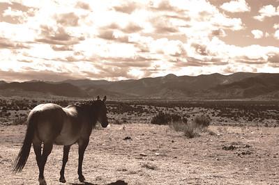CO 2008 10 Road Trip (16) sepia equal
