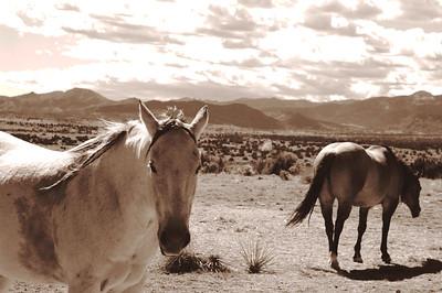 CO 2008 10 Road Trip (13) sepia equal