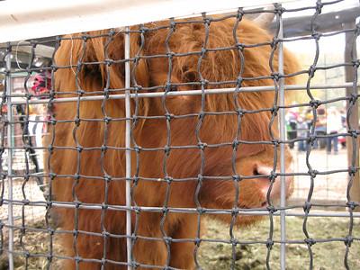CO 2010 10 Lukes Farm 1