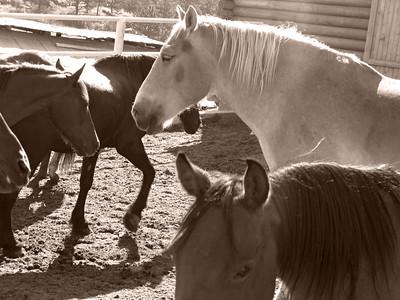 CO 2009 08 Estes Park (8) sepia