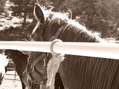 CO 2009 08 Estes Park (6) sepia