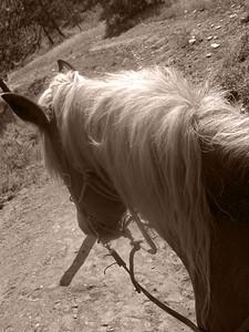 CO 2009 08 Estes Park (21) bw