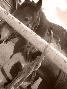 CO 2009 08 Estes Park (32) bw