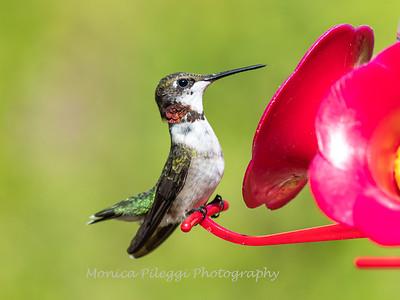 Hummingbird 29 Aug 2019-8523
