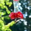 Hummingbirds Aug 2013 (2)-001