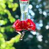 Hummingbirds Aug 2013 (3)-001