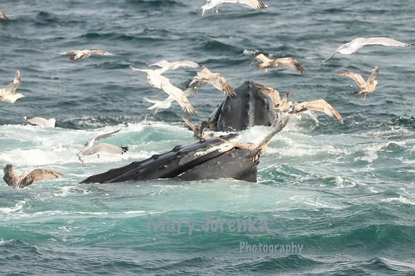 Mary Jurenka Wildlife Photography