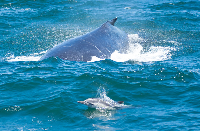 Humpback and dolphin.