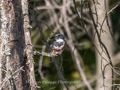 Huntley Meadows Birds 4 Sept 2017-6191