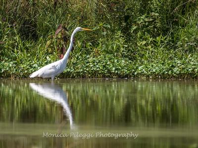 Huntley Meadows Birds 4 Sept 2017-6158