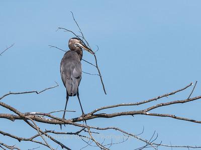 Huntley Meadows Birds 4 Sept 2017-6164
