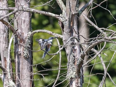 Huntley Meadows Birds 4 Sept 2017-6234