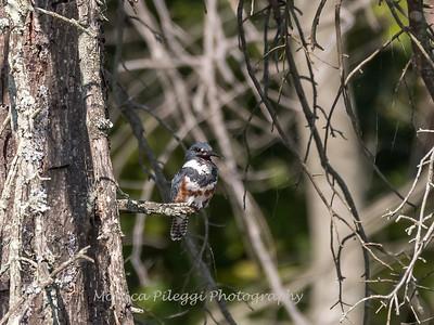 Huntley Meadows Birds 4 Sept 2017-6183