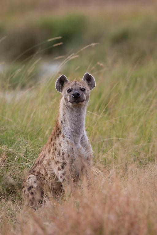 2007 07 26 Masai Mara 439