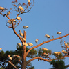IMG_2525-1Ibis Tree Oyster Bay 062811